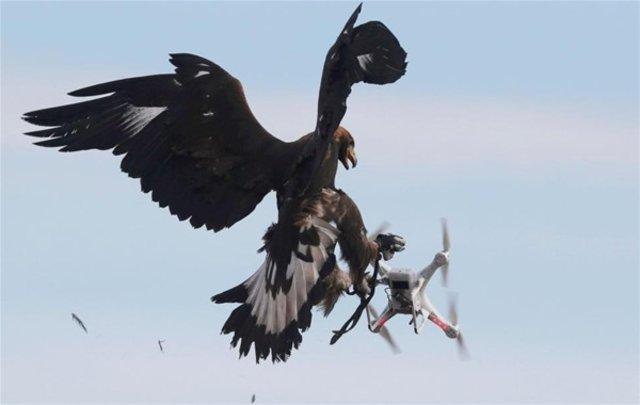 Drone Avcisi Kartal Son Dakika Haberler