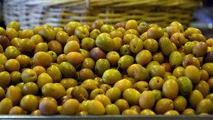 Zeytinyağı düştü, zeytin arttı!