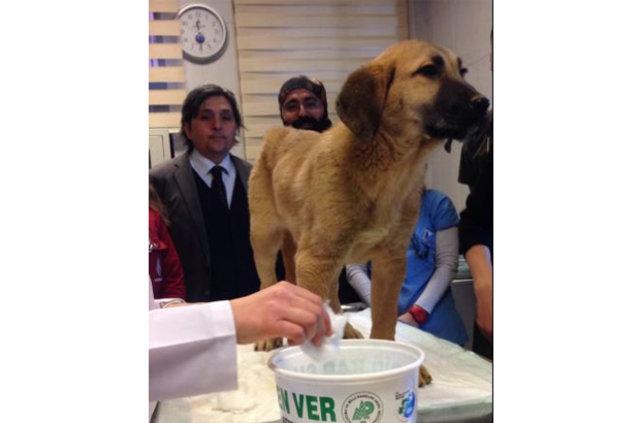 Beykoz'da kuyuya düşen köpek nasıl kurtarıldı?