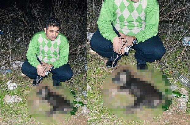 Muğla Milas'ta 15 kedi ve köpek zehirlenerek öldürüldü