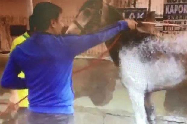 Kocaeli'de oto yıkamada at yıkayan iki kişi ilginç görüntüler oluşturdu
