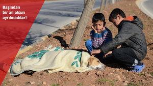 Suriyeli çocuklar yaralı köpeğin başından ayrılmadı