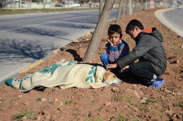 Kilis'te Suriyeli çocuklar yaralı köpeğin başından ayrılmadı