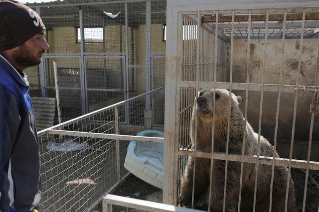 Hayvanlar da DEAŞ kurbanı!