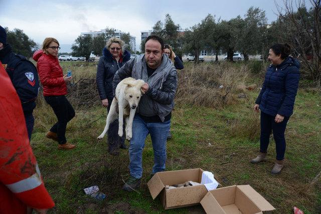 Balıkesir Edremit'te çukurda mahsur kalan anne köpek ve 8 yavrusu kurtarıldı