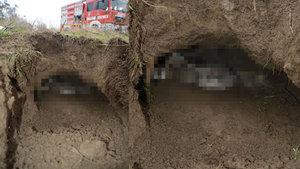 Balıkesir Edremit'te çukura düşen anne köpek ve 8 yavrusu kurtarıldı