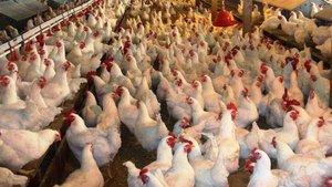 Çin'in yarısında kuş gribi vakası görüldü