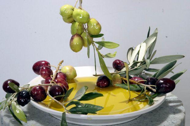 Türkiye ve Tunus zeytincilik sektöründe işbirliğine gidiyor
