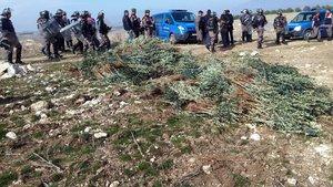 Hazine arazisine izinsiz dikilen 17 bin zeytin fidanı söküldü