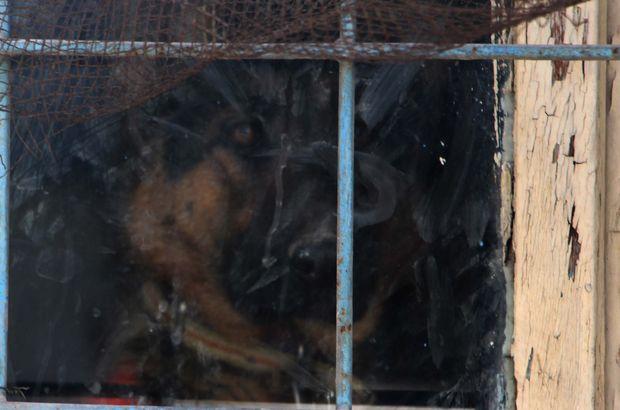 Terk edilmiş binada tutulan köpek özgürlüğüne kavuştu