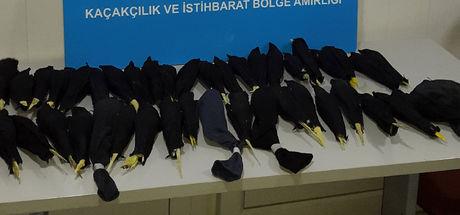 Edirne Dereköy Sınır Kapısı'nda papağan operasyonu