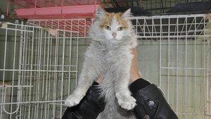 Mehmetçiğin El Bab'da bulduğu 'Barış' adlı kedi Türkiye'de