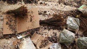 Organik diye satılan ama üzerinde fare ve böceklerin gezdiği ürünler ele geçirildi