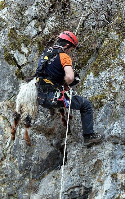 Karabük'te keçileri kurtarma operasyonu