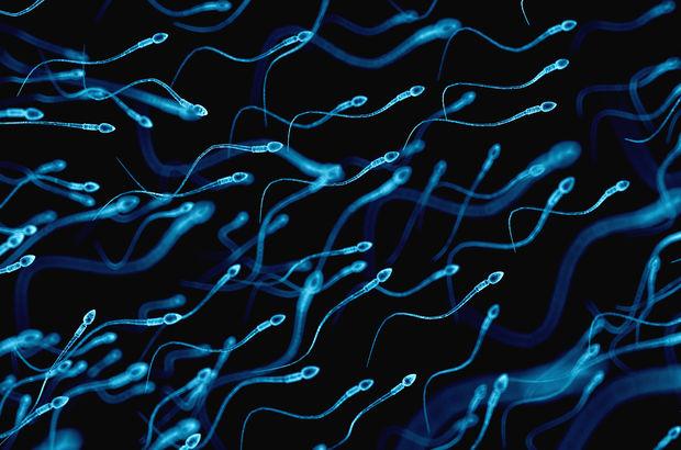 Telefonda konuşmak sperm kalitesini bozar mı?