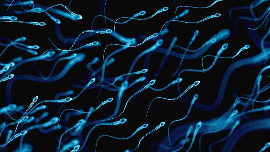 Sperm kalitesi