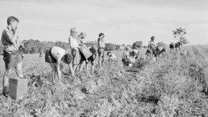 2. Dünya Savaşı sonrası kolonilere gönderilen çocuklara taciz iddiası