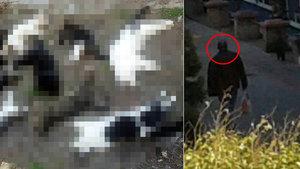 Antalya'daki kedi vahşetiyle ilgili 1 Rus vatandaşı gözaltında