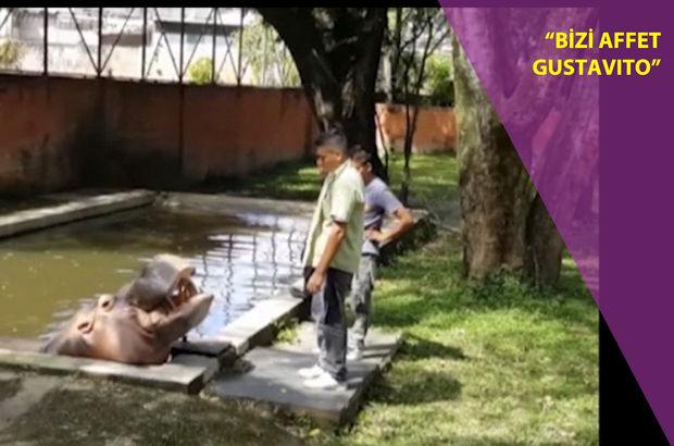 El Salvador'da kafesindeki su aygırı uğradığı saldırı sonucu öldü