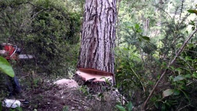 Ağaç kütüğünden lamba yaptı