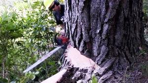 Ağaç kütüğünü muhteşem bir eşyaya çevirdi