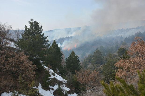 Çankırı'da 2 hektar alan yandı