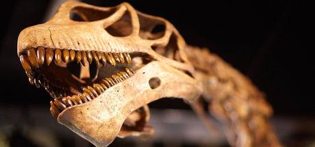 """""""Dünyanın en eski yaşam izleri"""" Kanada'da bulundu"""
