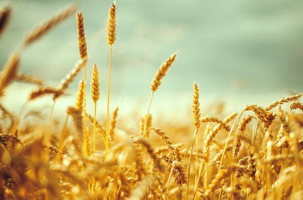 Çiftçi borsası işleme açılıyor