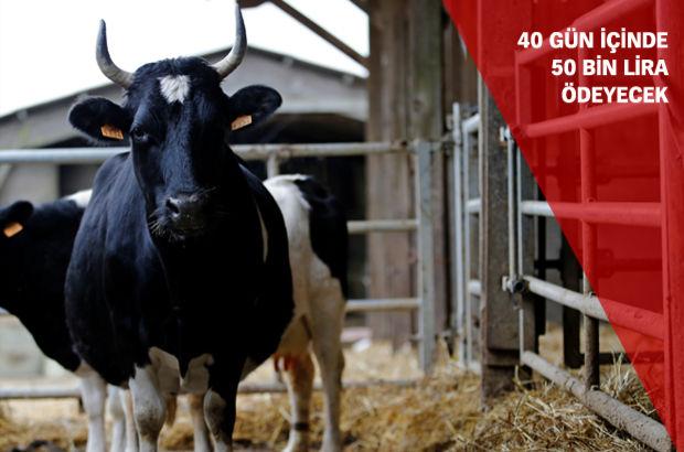 İsviçre'de inekleri silahla tehdide 50 bin lira ceza