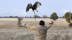 Eskişehir'de tedavi edilen baykuş ve şahinler doğaya salındı