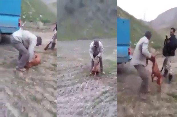 köpek şiddet