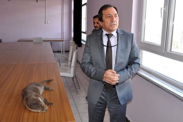 Tunceli'de yaralı su samuru bulundu
