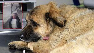 Muğla'da köpekleri zehirleyen kadın kameralara yakalandı