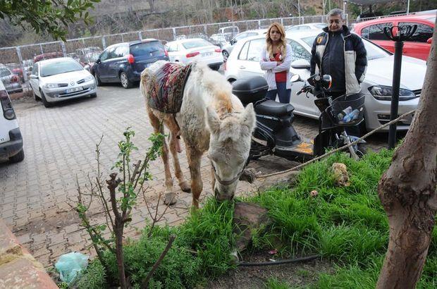 Gaziantep'te kuyruğunu kesip, kırbaçla kör ettikleri atı sokağa attılar