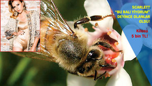 Manuka balı arılarına mafya el attı!