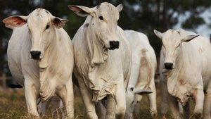AB'den Brezilya'dan et ithalatı kararı