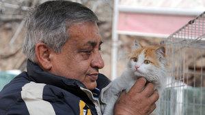 Mehmetçik'in kurtardığı 'Barış' kediye dünyanın dört bir yanından talip oldular