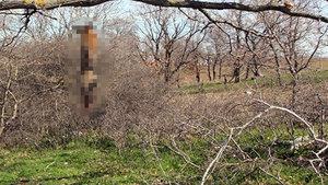 Tekirdağ'da öldürdükleri tilkiyi ağaca astılar!