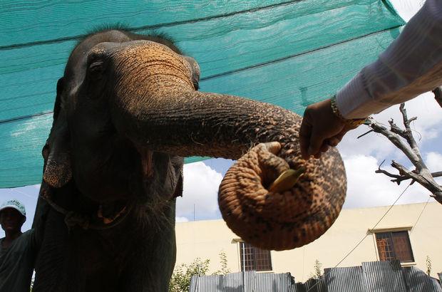 Çamura saplanan filler günler sonra kurtarıldı