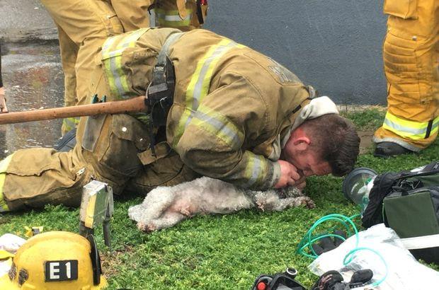 Kahraman itfaiyeci cansız köpeğe nefes oldu!