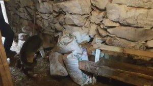 Kayseri'de uyuşturucuyu tavuk yemi arasına gizlemişler