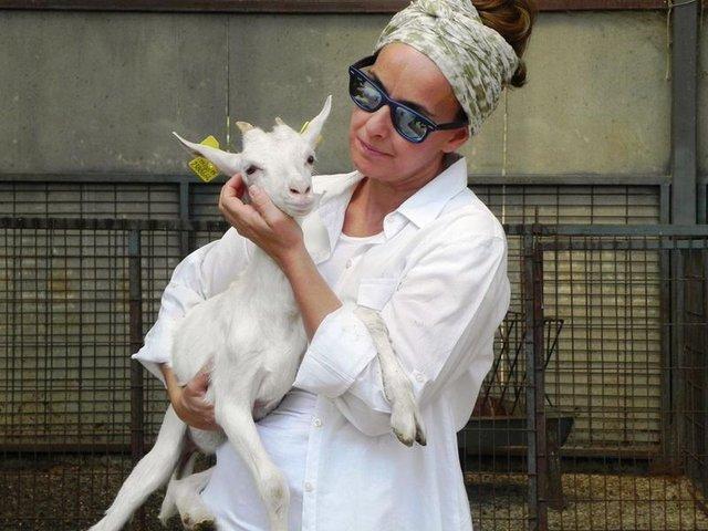 Saanen keçi çobanı İstanbullu mimar, söylenenlere kulak asmadı