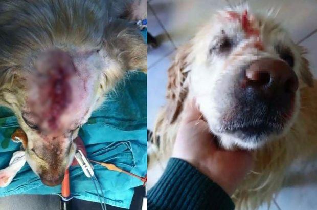 Cindy adlı köpeğin dövülmesiyle ilgili duruşmada kavga çıktı
