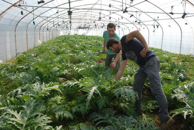 Topraksız tarım ile Kazdağları'nda verimi artırdılar!