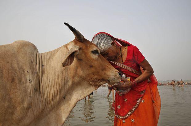Hindistan'da inekleri öldürene müebbet hapis!