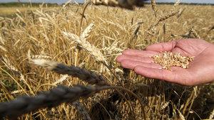 Rusya'dan tahıl sevkiyatı hakkında açıklama