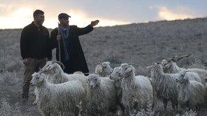 Anadolu Yetiştiriciler, Canlı Hayvan ve Çobanlar Fuarı Ankara'da