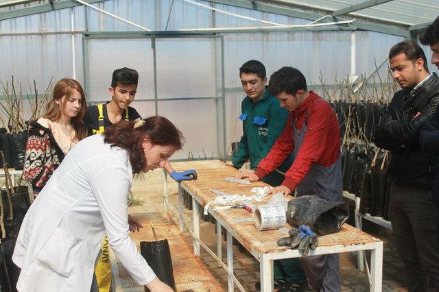 Lise öğrencileri Kaman cevizine marka değeri katıyor