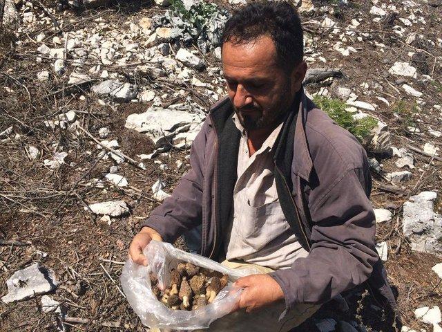 Antalya'da kuzugöbeği mantarı sezonu başladı