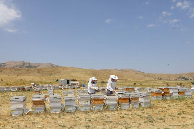 Arı kovanlarına ulaşım için teleferik sistemi kurdu